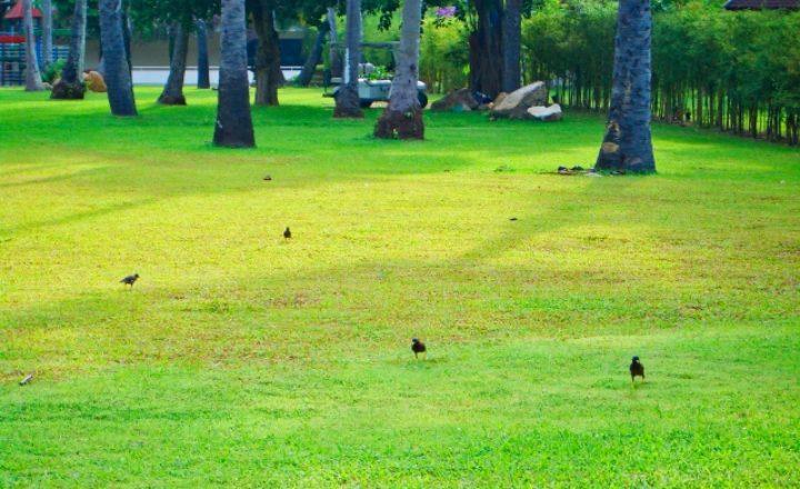 大阪の名門ゴルフ場といえばココ!全国的に有名な高級コースのおすすめランキング5選!