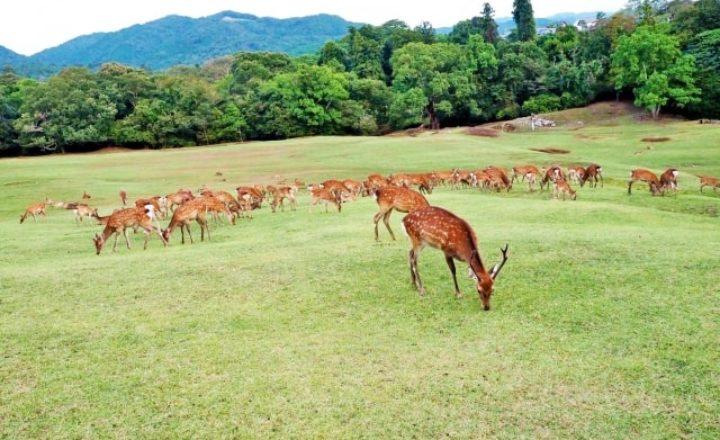 奈良県のゴルフ場のおすすめ人気ランキング!予約が多いベストコース10選!